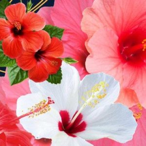 7 Skin Care Benefits Of Hibiscus For Glowing Skin