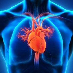 Risk for Cardiovascular Disease Varies Between U.S. States